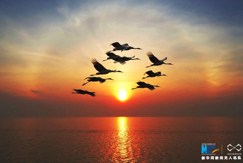 夕阳下,一群丹顶鹤飞过水面。新华网 陈国远摄