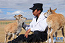 可可西里藏羚羊7只幼羚得到救助