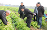 安徽岳西出新招 贫困人口减少数万