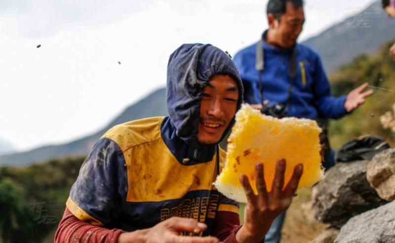 一村民挖出了这个蜂洞的第一块蜂蜜,虽然他的左眼被蜜蜂蜇了,但依然十分开心。因为交通闭塞,信息不畅通,村民们的蜂蜜销售主要是靠蜂蜜商进村收购,像这样上好的蜂蜜原浆,才卖50块一斤。