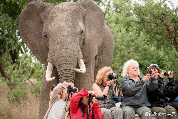 全球热衷于社交媒体的人们与动物们拍下了很多绝妙的合影。动物们很偏爱举着相机的游客,不论是否收到合影邀请,它们在镜头下都十分欢乐。 图片来源:网易
