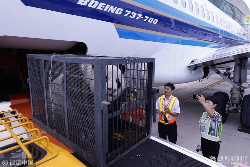 疑受虐待大熊猫离开武汉