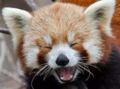 世界微笑日:动物的迷人微笑 你pick哪一个