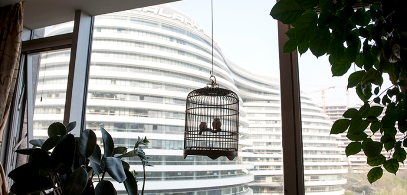 """精致的鸟笼终日面对着朝阳门SOHO,鸟儿很久前就已放生。画室主人在这片五十见方的空间画画,从早上直到深夜,社交断绝。""""当然痛苦是避免不了的,但我已准备好随时迎接他们。"""""""