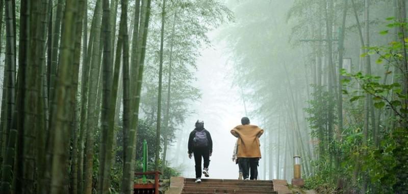 游客在赤水竹海国家森林公园里观光(2018年10月24日摄)。