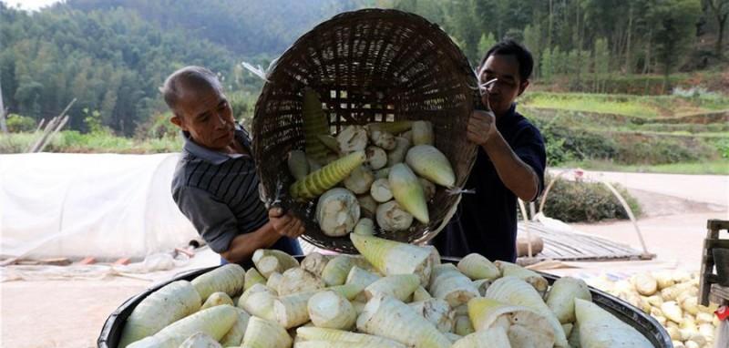 贵州省赤水市丙安镇丙安村的农民装运竹笋准备外销(3月30日摄)。