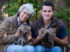 男子用剖腹产救出4只狐狸幼崽