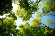 全球森林面积2030年前要提高3%
