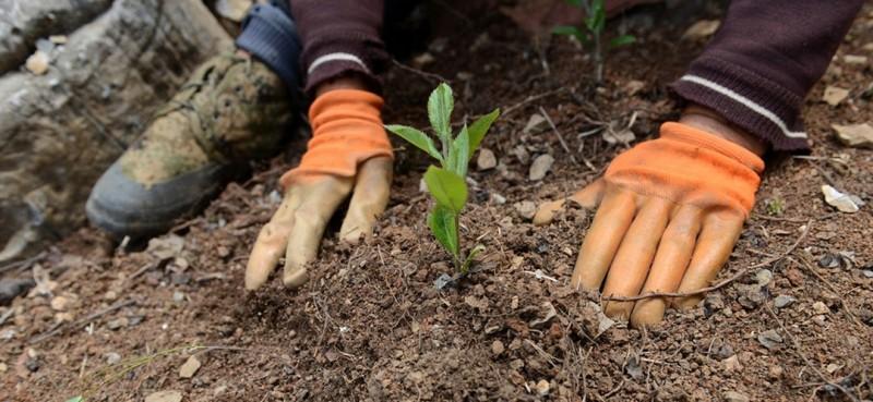 曾付学在开荒改造出来的地里种上了连翘等中药材。