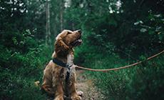 """保护宠物短片:《我们都是""""胜利者""""》"""