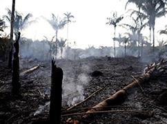 亚马孙雨林不会被火烧光,但会因火而死