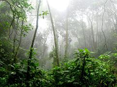 亚马孙雨林你知多少?