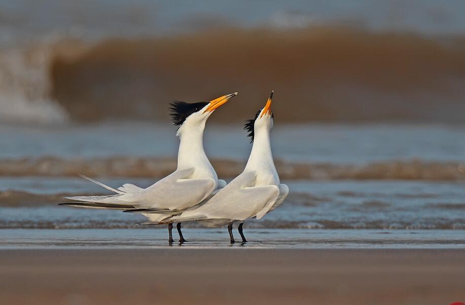 """最""""诗意""""的护鸟志愿者"""