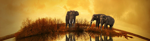 象牙是宝贝,活着的大象更是宝贝