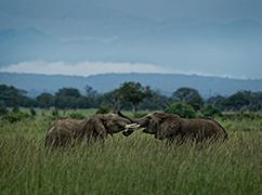 我们谈论保护大象时在谈论什么?