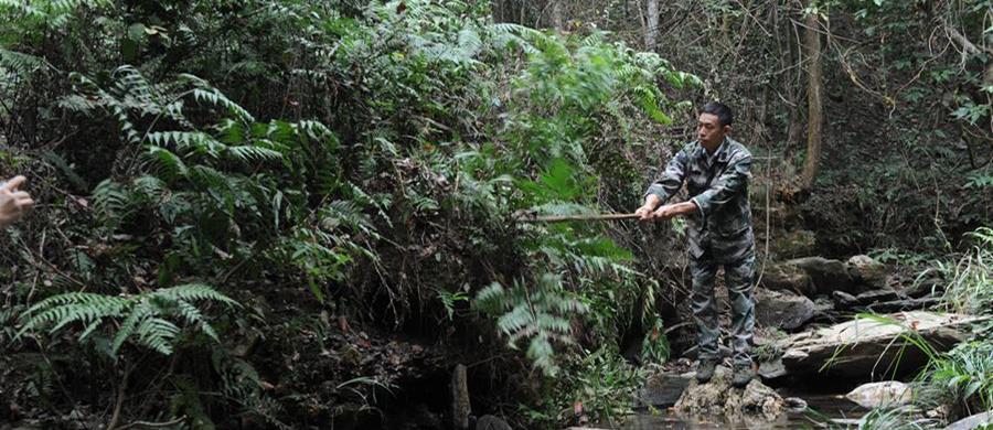 10月16日,皮海云在江西新干黎山林场连坑分场清理溪边杂草。