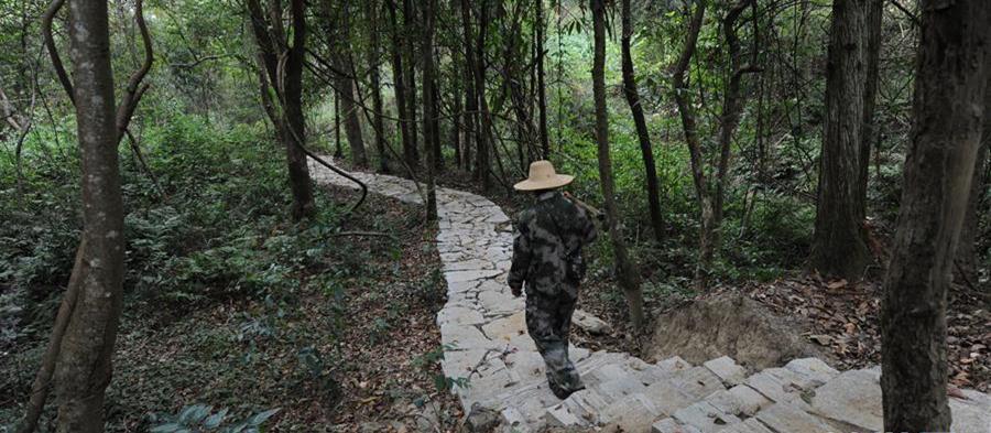 10月16日,皮海云在江西新干黎山林场连坑分场巡山。