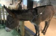 北京室内动物园开设土拨鼠项目叫停