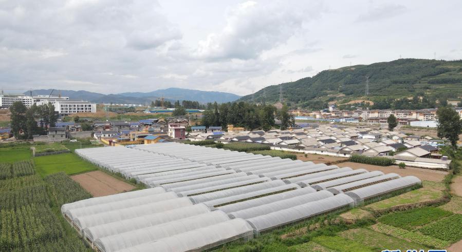 8月11日拍摄的位于布拖县的番茄种植基地(无人机照片)。